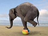 Elephant using its front legs to balance on a beach ball